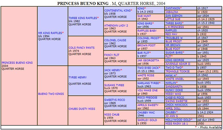 Pedigree PRINCESS BUENO KING